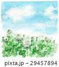 クローバー 白詰草 青空のイラスト 29457894