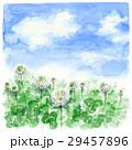 クローバー 白詰草 青空のイラスト 29457896