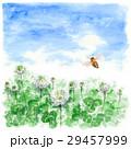 クローバー 白詰草 花のイラスト 29457999