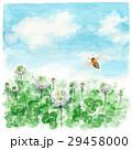 クローバー 白詰草 花のイラスト 29458000