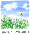 クローバー 白詰草 花のイラスト 29458001