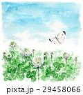 クローバー 白詰草 モンシロチョウのイラスト 29458066