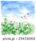 クローバー 白詰草 モンシロチョウのイラスト 29458068