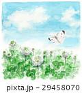 クローバー 白詰草 モンシロチョウのイラスト 29458070