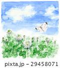 クローバー 白詰草 モンシロチョウのイラスト 29458071