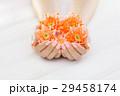 マニキュア 菊科 キクの写真 29458174