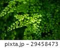 背景 植物学 環境の写真 29458473