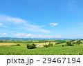 青空 北海道 夏の写真 29467194