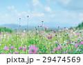 ホワイト フラワー 花の写真 29474569