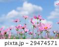 ホワイト フラワー 花の写真 29474571