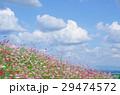 ホワイト フラワー 花の写真 29474572