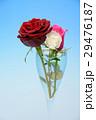 薔薇の花 29476187