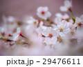 桜の花 29476611