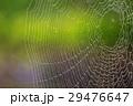 蜘蛛 蜘蛛の巣 巣の写真 29476647