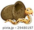 動物 たまご 卵のイラスト 29480197