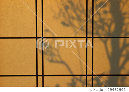 障子に映る木の影 29482965