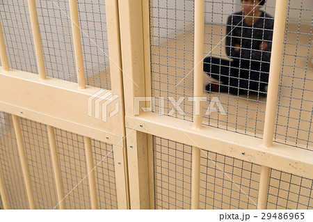 刑務所、留置所、犯罪、逮捕、保留、監獄、牢屋、拘束、犯人、牢獄、詐欺、捕まえる、警察、男性、日本人 29486965