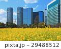 浜離宮恩賜庭園の菜の花畑 29488512