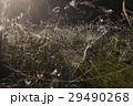 ウェブ くものす 蜘蛛の巣の写真 29490268
