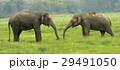 動物 自然 アジアの写真 29491050