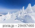 山形蔵王_快晴に輝く樹氷群 29497460