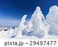蔵王 樹氷 樹氷群の写真 29497477