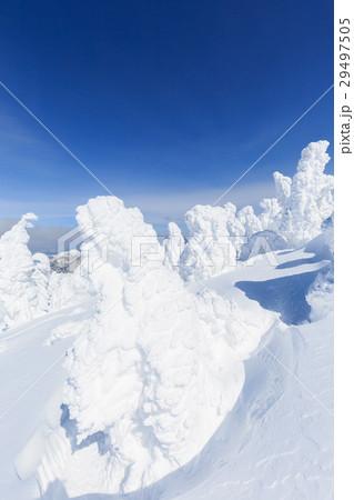 山形蔵王_快晴に輝く樹氷群 29497505