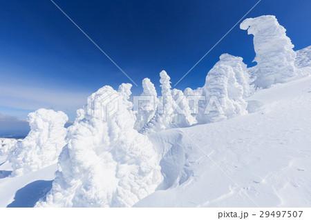 山形蔵王_快晴に輝く樹氷群 29497507