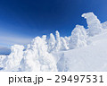 蔵王 樹氷 樹氷群の写真 29497531