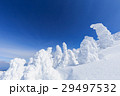 蔵王 樹氷 樹氷群の写真 29497532