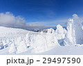蔵王 樹氷 樹氷群の写真 29497590
