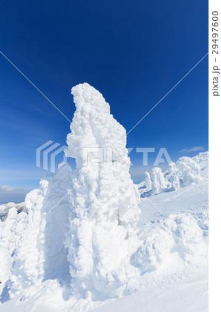 山形蔵王_快晴に輝く樹氷群 29497600