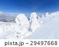 蔵王 樹氷 樹氷群の写真 29497668