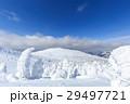 蔵王 樹氷 樹氷群の写真 29497721