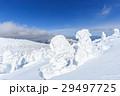 蔵王 樹氷 樹氷群の写真 29497725