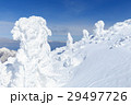 山形蔵王_快晴に輝く樹氷群 29497726