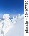 蔵王 樹氷 樹氷群の写真 29497730