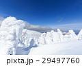 山形蔵王_快晴に輝く樹氷群 29497760