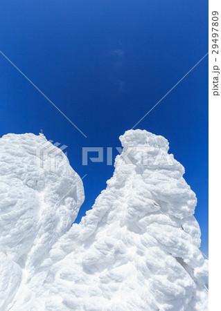山形蔵王_快晴に輝く樹氷群 29497809