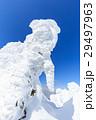 山形蔵王_快晴に輝く樹氷群 29497963