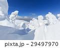 山形蔵王_快晴に輝く樹氷群 29497970