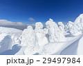 山形蔵王_快晴に輝く樹氷群 29497984