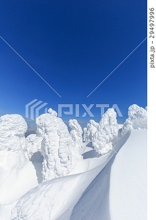 山形蔵王_快晴に輝く樹氷群 29497996