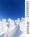 山形蔵王_最盛期の樹氷群 29498095