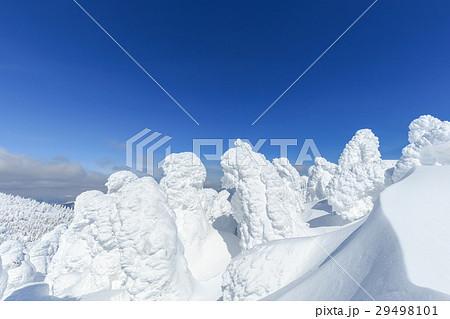 山形蔵王_最盛期の樹氷群 29498101