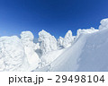 蔵王 樹氷 樹氷群の写真 29498104