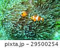 海中 写真  29500254
