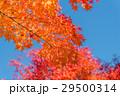 紅葉と青空 29500314