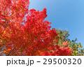 紅葉と青空 29500320