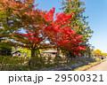 紅葉と青空 29500321